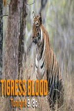 Discovery Channel-tigress Blood