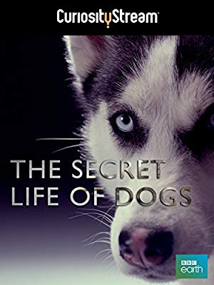 Secret Life Of Dogs